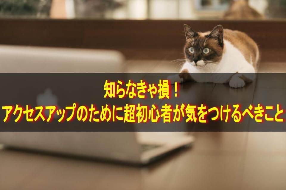 パソコン画面を見る猫・テキスト「知らなきゃ損!アクセスアップのために超初心者が気をつけるべきこと」