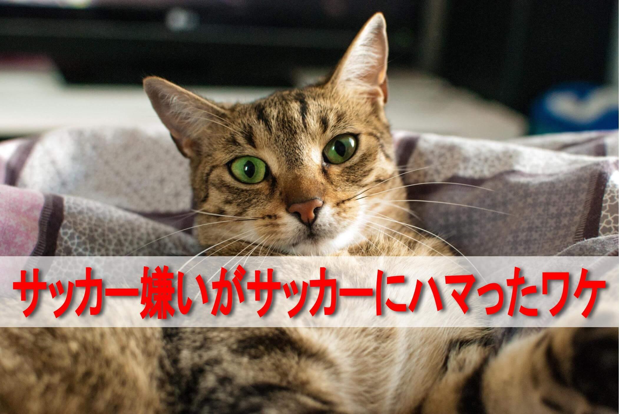 見つめる猫 「サッカー嫌いがサッカーにハマったワケ」