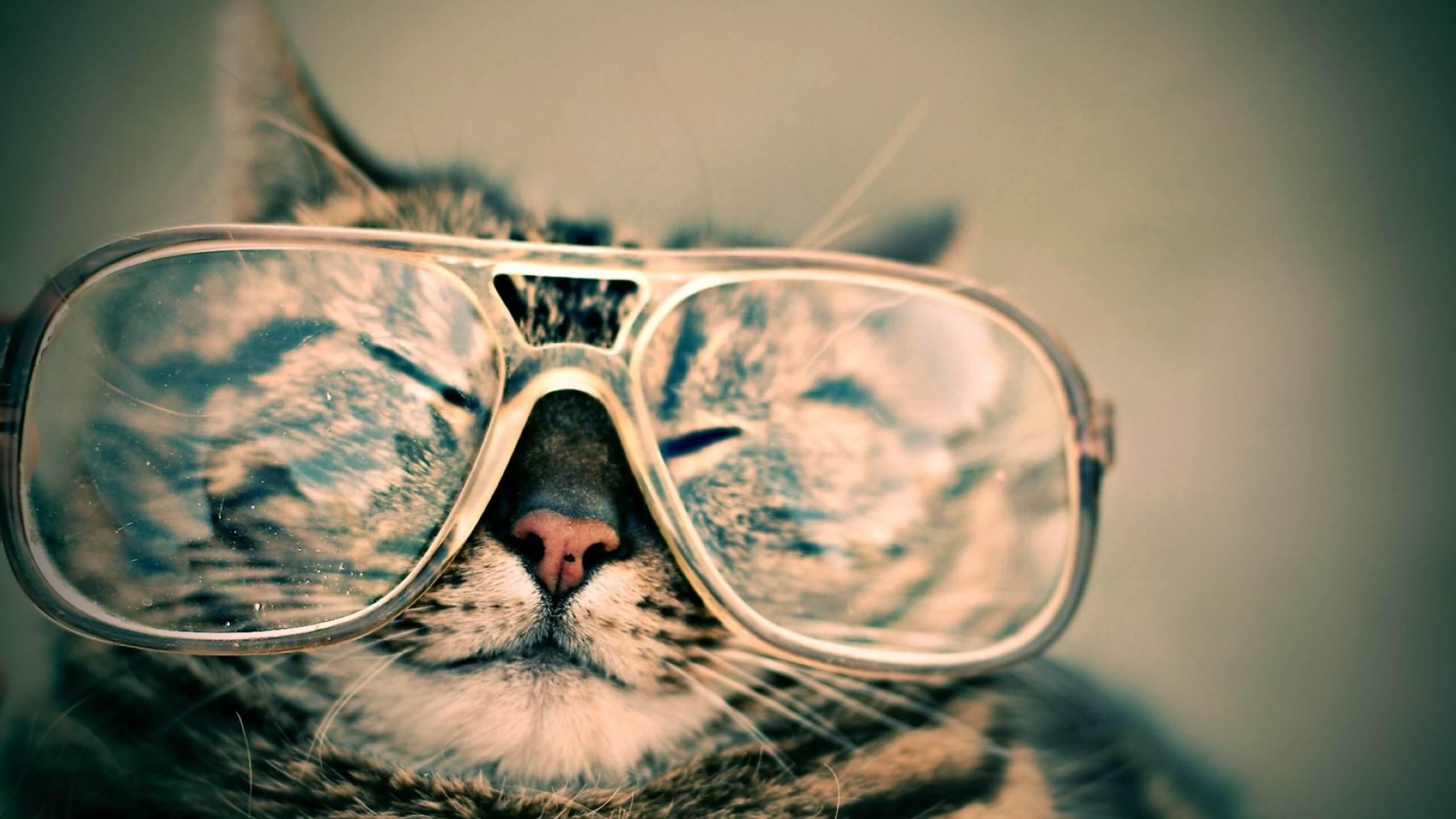 メガネをかけて眠そうな猫