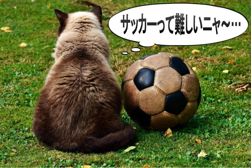 サッカーボールと猫の後ろ姿