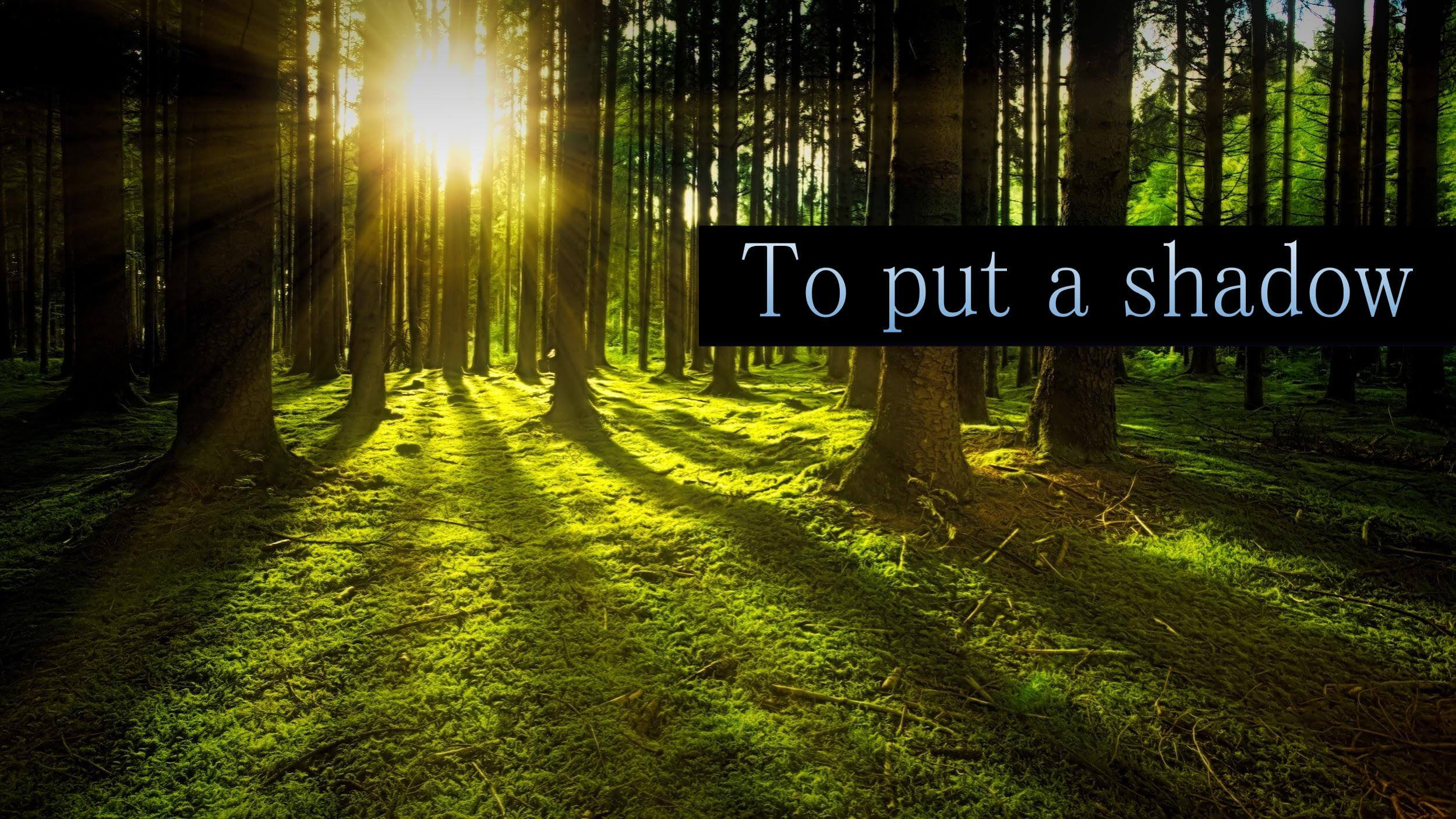 太陽が照らす深い森 「To put a shadow」
