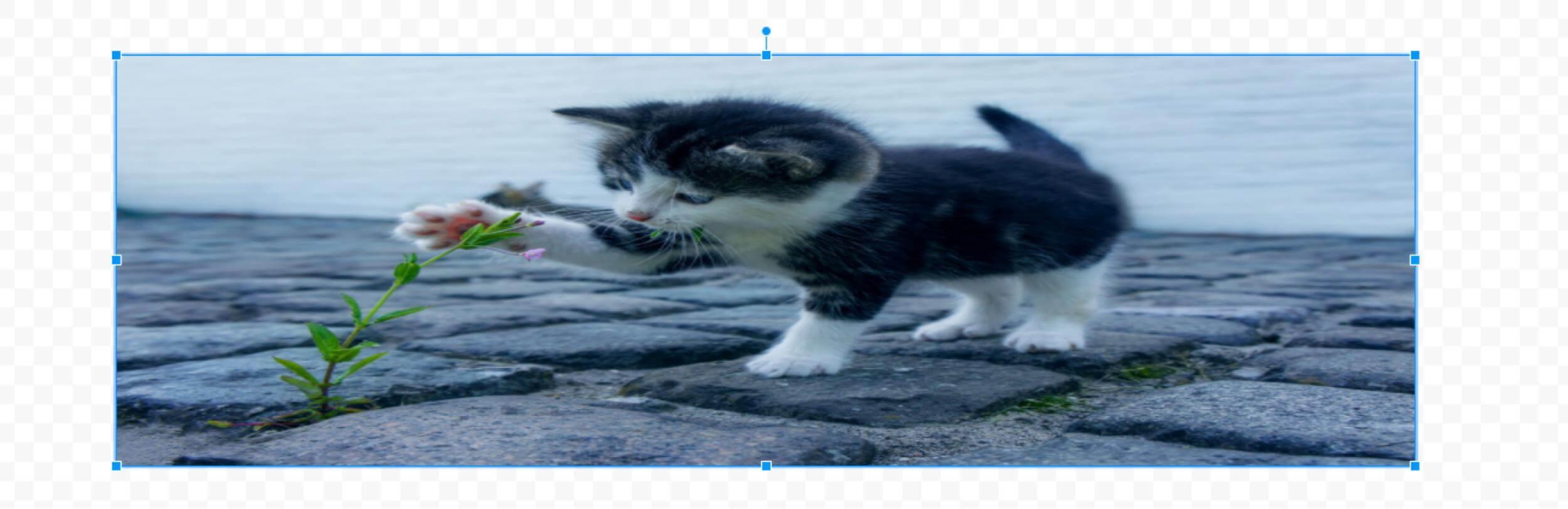 画像のサイズ変更 縦横比を横長に